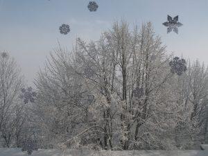 Décembre2008 612